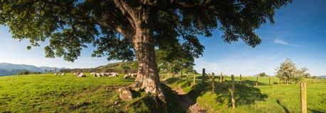 Lantligt landskap, sjöområde, UK Arkivfoto