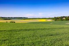 Lantligt landskap sydliga England UK för sommar royaltyfria foton