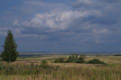 Lantligt landskapfält med skäggstubb Arkivbilder