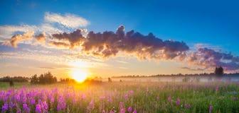 Lantligt panoramalandskap med soluppgång och blomstraängen arkivbilder