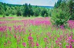 Lantligt sommarlandskap med en blomstra äng arkivbilder