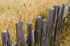 Lantligt staket bredvid ett guld- fält av gräs royaltyfri foto