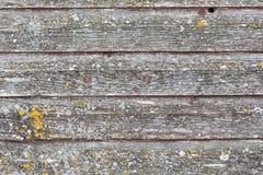 lantligt trä för bakgrund Arkivfoton