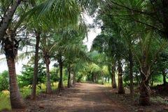 lantligt tropiskt för väg arkivfoto