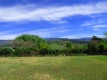 Lants et arbres Ciel bleu avec quelques nuages Photo stock