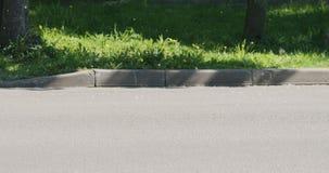 Lanugine del pioppo su una via immagine stock libera da diritti