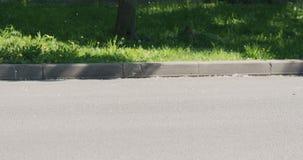 Lanugine del pioppo su una via fotografie stock
