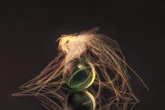Lanugine e perla di vetro fotografia stock libera da diritti