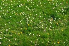 Lanw met bloemen Stock Foto