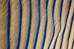 Lanz spain abstract  sand dry and lichens Stock Images