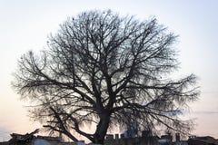 Lanzamiento ancho del lanzamiento de la silueta del árbol en el tiempo de la puesta del sol imagenes de archivo