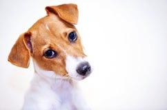 Lanzamiento de la cabeza de perro Fotografía de archivo libre de regalías