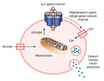 Lanzamiento de la insulina de la célula stock de ilustración
