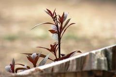 Lanzamiento de las plantas Imagen de archivo libre de regalías