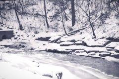 Lanzamiento del invierno Fotos de archivo libres de regalías