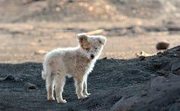 Lanzamiento del perro de los tugurios fuera de la ciudad fotografía de archivo libre de regalías