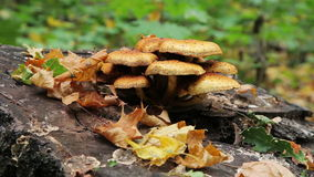 Lanzamiento del resbalador de Forest Mushrooms almacen de metraje de vídeo