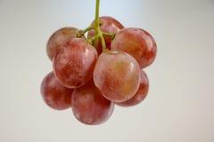 Lanzamiento ligero del sitio de la uva Imágenes de archivo libres de regalías