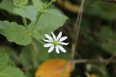 Lanzamiento macro de la flor blanca fotografía de archivo libre de regalías
