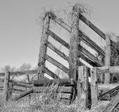 Lanzamiento viejo del ganado Foto de archivo libre de regalías