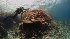 Lanzamientos del buceador del cameraman de la escuela de pescados profundamente bajo el agua en el Mar Rojo almacen de video