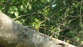 Lanzamientos jovenes de un árbol caido almacen de video