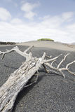 Lanzarote_2. The volcanic landscape of Lanzarote Island (Canary Islands Royalty Free Stock Photos