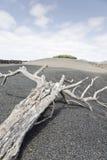 Lanzarote_2 Fotos de Stock Royalty Free