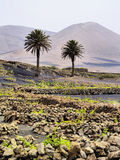 Lanzarote Royalty Free Stock Image