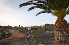 Τοπίο πάρκων Lanzarote Στοκ Φωτογραφίες