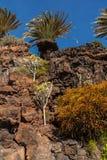 Lanzarote Στοκ φωτογραφίες με δικαίωμα ελεύθερης χρήσης