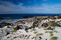 Lanzarote beach Royalty Free Stock Photo