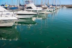 LANZAROTE, CANARIO ISLANDS/SPAIN - 10 DE AGOSTO: Un puerto deportivo en Lanzar imagen de archivo