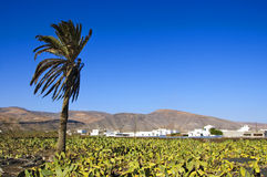 Lanzarote, Canary Islands, Spain Royalty Free Stock Image