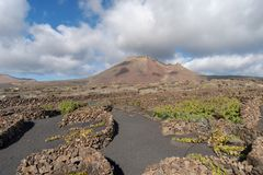 Lanzarote, Canary Islands, Spain, Vineyard on the lava. La Geria, Lanzarote Island, Canary, Spain, Vineyards in dark lava soil stock photo