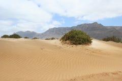 Lanzarote dunes, Canary Island Royalty Free Stock Photography