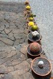 Lanzarote Guatiza cactus garden pots in a row Royalty Free Stock Images
