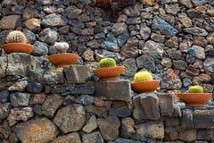 Lanzarote Guatiza cactus garden pots in a row Royalty Free Stock Photo