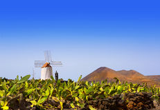 Lanzarote Guatiza cactus garden windmill Stock Photo