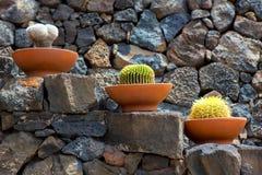 Lanzarote Guatiza kaktusa ogródu garnki z rzędu Obraz Stock