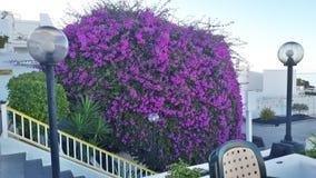 Lanzarote het eiland bloeit hotelpuerto royalty-vrije stock afbeelding