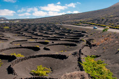 Lanzarote island vineyard landscape Stock Images