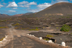Lanzarote island vineyard landscape Stock Photos