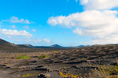 Lanzarote island vineyards Royalty Free Stock Photography