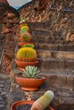 Lanzarote, Jardin de Cactus, Cactuses in the pot on the stone stairs. Royalty Free Stock Image