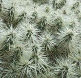 Lanzarote Kaktusowi ogródy 005 Obrazy Royalty Free