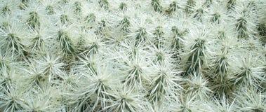 Lanzarote Kaktusowi ogródy 003 Zdjęcia Stock