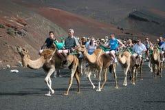 LANZAROTE KANARIEFÅGEL ISLANDS/SPAIN - AUGUSTI 8: Husvagn av kamel c arkivfoto