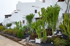 Lanzarote lägenhetlandskap arkivfoton
