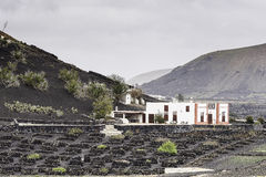 Lanzarote La Geria vineyard on black volcanic soil Royalty Free Stock Image